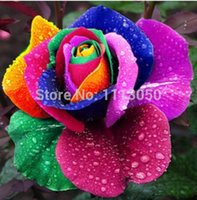 Wholesale Roses Multi Colored - Free shipping 200pcs Beautiful Rainbow Rose Seeds Multi-colored Rose seeds Rose Flower Seeds