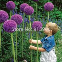 ingrosso ornamenti da giardino di vetro-25pcs viola gigante Allium Giganteum bellissimo fiore semi giardino pianta regalo