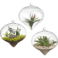 Wholesale Onion Glasses - 12pcs Dia 8 10 12cm Fashion Garden onion glass vase creative home decor. Succulent Terrarium Kit Housewarming Gift
