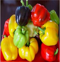 Wholesale Bell Peppers Seeds - Colorful Bell Pepper Seed Vegetable Seeds balcony plants seeds garden planting seeds potted plants spring autumn sowing