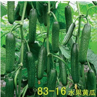 Organic organic vegetable food - Hot selling fruit white cucumber seeds cucumber seed cucumbers Cuke Seeds Green vegetable Seeds Green Food