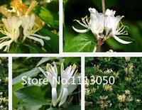 Wholesale Kinds Plants - Sale! Free Shipping 100pcs 10 kinds Bonsai Honeysuckle Seeds 100% Genuine Organic Blooming Flower Seeds Garden Plant
