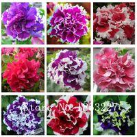 Wholesale Petunia Seeds - Garden Petunia petals flower seeds for garden petunia semillas de petunias, 100 seeds bag