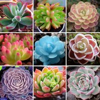 Wholesale China Wholesale Shipping Supplies - 24 kinds Succulents New Seeds 1440 Rare Mini Potted Flower Seeds Office Home Decorative Garden Supplies Free Shipping from China