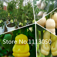 Wholesale Kinds Plants - Sale! Free Shipping 100pcs 10 kinds Bonsai Ginseng Seeds 100% Genuine Organic Blooming Fruit Seeds Garden Plant