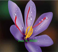Wholesale Cheap Wholesale Bonsai - Saffron seeds, free shipping cheap Saffron seeds, Saffron potted seed, Bonsai balcony flower - 100 pcs bag