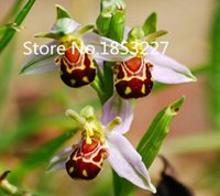 Wholesale Smile Wholesale China - Free Shipping 50 Seeds China Rare Flower Bee Orchid Flower Seed Smile Face Interesting Flowers Seed Flora Semillas Bee Gift