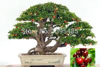 комнатные фруктовые деревья оптовых-11.11 продвижение сегодня высококлассные комнатных растений, нужно фруктов комнатные, Тайвань мини-Жемчужина семена вишни 20 шт Семена бонсай