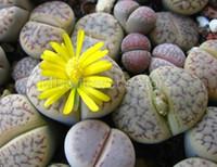 organische steine großhandel-100 seltene Mix Lithops Samen Living Stones Sukkulenten Kaktus Bio Garten Groß Samen S016