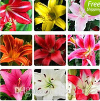 Wholesale 30 OFF Lily seeds flower seeds potted plants budding varieties mixed colors