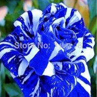 Organic organic rose gardening - Flower Bonsai seeds Blue Dragon Rose Seeds Rare Color DIY Yard or Potted flower Home Garden