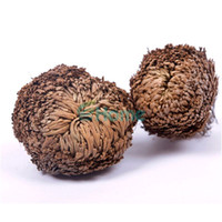 Wholesale Air Stones - New Resurrection Plant Rose of Jericho Dinosaur Plant Air Fern Selaginella Moss#61285