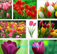 Wholesale Plants Seeds Bulbs - Hot Selling 100pcs Tulip Bulbs, Tulip Ball Seeds Bonsai Flower Pot Plant Ball Mix Colors DIY Home Garden Free Shipping
