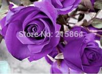 amante de la flor morada al por mayor-ENVÍO GRATIS 100 Semillas China Rare Purple Rose Flower To Your Lover / MG6-100