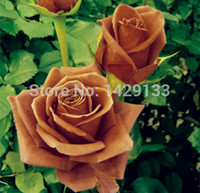 Wholesale Flower seeds SEEDS CHOCOLATE MINT ROSE SEEDS Bonsai Flower Plant Seeds Semillas de Flores Lover gift