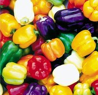 spring vegetable garden - Colorful Bell Pepper Seeds Vegetable Seeds balcony plants seeds garden planting seeds potted plants seeds spring autumn sowing seeds
