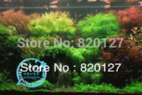 Wholesale Grass Seed Planting - Free Shipping 18 Kinds Mixed Packing Water Grass Seeds ;Aquarium Water Grass Aquatic Plants Seeds ,10g  Bag ,About 3000pcs
