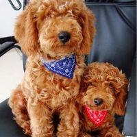 Wholesale Groom Scarf - Hot Adjustable Dog Neck Scarf Leather Pet Puppy Cat Bandana Collar Candy Grooming Neckerchief Necktie Wear Coat Costume