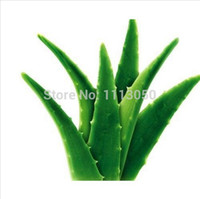 organic edible flowers - 100pcs Vegetables and fruit seeds Aloe vera seeds edible beauty Edible cosmetic Bonsai plants Seeds for home garden