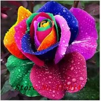 Wholesale Colored Seed - .Wholesale 100pcs New Multi-colored Rainbow Rose Seeds Home Gardening Chinese Rose Flower Seed Bonsai pots plants Free Shipping,