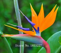 Wholesale Seeds Birds - 100pcs pack.Flower pots planters All sorts of color Strelitzia reginae seeds hybrid bird paradise seed Bonsai plants Seeds