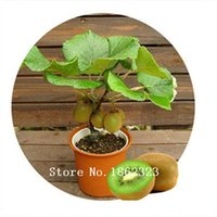 Wholesale Diy Garden Gift - 100 rare bonsai kiwi seeds send seeds for gift fruit seeds for DIY home garden planting new year only $1.11