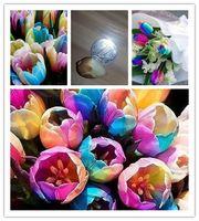 ingrosso piantare piante di tulipani-Bulbi di tulipani rari arcobaleno 2PC mondo. I semi di fiori più belli. Semplice bonsai Piante da giardino
