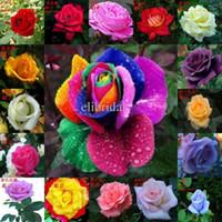 karışık çiçek tohumları toptan satış-Karışık 24 renkler 100 Tohumlar / paketi Gökkuşağı Gül Tohumları Gül Çiçek Tohumları Saksı Çiçekleri Bahçe Dekorasyon Bonsai Çiçek Tohumları