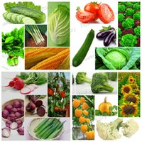 Wholesale Fresh Fruits Vegetables - 4500 Pcs Vegetable Fruit Survival Heirloom DIY Home Garden Fresh Seeds 20 Kinds Pack Easy to Grow Free Shipping