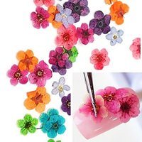 Wholesale Dry Flower Nail Decoration - Wholesale-3d nail decoration nail art design 3d natual dry flower deco nails 12 colors DIY Decor tool case 2015 new arrival promotion