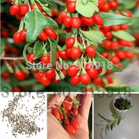 Wholesale Wholesale Goji Berry - 100 Himalayan Goji Berry seeds, (wolfberry ), most popular heathy berry ,dwarf bush rich in Antioxidant ! you choose!