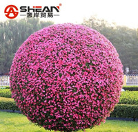 ingrosso semi di gloria-Rare Petunia Tree Seeds Morning Glory Semi di fiori Vaso di fiori Bonsai Petunia per giardino domestico fai da te - 50 PZ