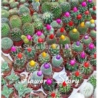 frei mehrjährige samen großhandel-Freies Verschiffen, 10 Kaktus-Samen, ursprüngliches Paket, hardy saftige beständige Pflanze