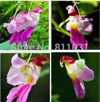 ingrosso sementi di qualità-20 pz cina rare pappagallo orchidea semi di fiori del mondo rari di alta qualità bonsai giardino semi di casa semillas loro flores spedizione gratuita