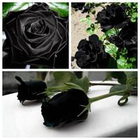 Acheter Des Roses Noires vente en gros graines de roses noires 2018 en vrac à partir de
