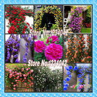 Wholesale chinese fruit seeds resale online - Climbing Plants Chinese Flower Seeds Climbing Roses Seeds Piece Piece Variety Flowering plants
