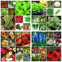 Wholesale Pretty Homes - 6618Pcs Vegetable Flower Fruit Seeds 40 Different KindsDIY Home Garden Non-Gmo Healthy Pretty Popular Free Shipping TC012-40Hun