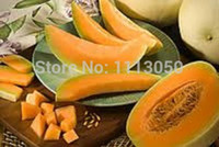organic gourmet - New Rare Orange Honeydew Melon Gourmet Heirloom seeds RARE No GMO s Organic