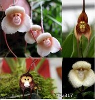 Flower Seeds orchids varieties - Flower pots planters Beautiful Monkey face orchids seeds Multiple varieties Bonsai plants Seeds for home garden pc seeds