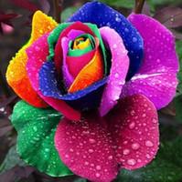 Wholesale Minimum Order Pc - (Mix minimum order $5) 100 pcs Seeds Rare Holland Rainbow Rose,Flower Home Garden rare rainbow rose flower seeds Free shipping