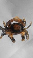 Wholesale Order Crabs - 8cm soft crab lure bait aritificial crab with treble hook mix colour order