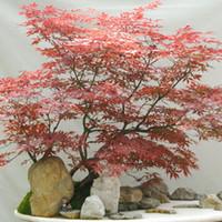 ingrosso albero di bonsai di acero rosso-30 Pz America Maple Seeds Bonsai Alberi Molto Belli Semi di Acero Rosso Decorazione del Giardino Semi di Fiori Bonsai