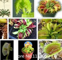 Wholesale Traps Free Shipping - Promotion Free shipping Dionaea seeds Muscipula Giant Clip Venus Fly trap Seeds 300PCS Insectivorous seed Garden flower Seed Bon