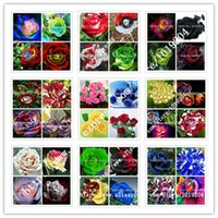 Wholesale Bonsai Roses - 36 varieties of roses mixed seed, 200PC rare bonsai rainbow flower seeds, full color plant, A group of potted rose seeds