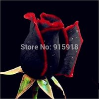 красные садовые цветы оптовых-Бонсай семена цветов 50 шт. редкие удивительно красивые черный красный край розы семена Главная сад DIY Бесплатная доставка