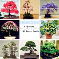 Wholesale Sakura Tree - Bonsai seeds 8 packs Bonsai Tree Seeds Pine,maple bonsai,Sakura,DIY Home Garden,Free shipping