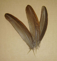Wholesale Chicken Feathers For Sale - Free shipping 50pcs 12-16cm real natural rare pheasant feathers plume for jewelry craft headwear accessories making bulk sale