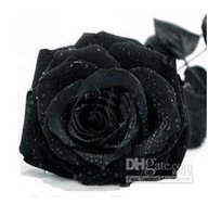 Wholesale 30 OFF Fashion COLORS ROSE SEEDS Rainbow purple Red Black Red White Yellow Green Blue Rose plant seeds