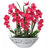 ingrosso piante per giardino balcone-100 semi / pack Phalaenopsis Orchids Semi Famiglia Pacchetti Facilmente Balcone Patio Semi di piante Decorazione del giardino Semi di fiori bonsai