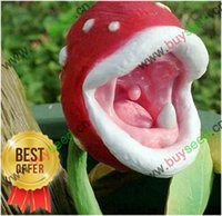 Wholesale Desk Bonsai - Free Shipping insect-catching plant enchantress Carnivorous plant desk Pot Bonsai seeds,100pcs bag